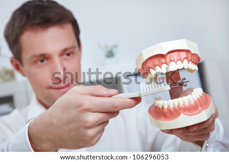 Dentist holding oversized teeth model and toothbrush in his office - stock photo