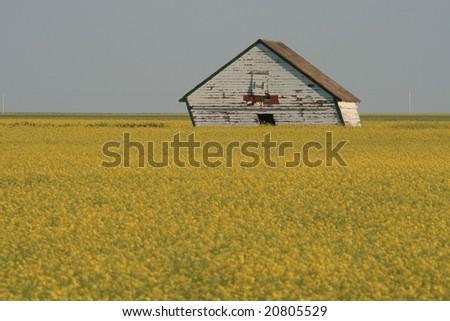 derelict barn in grain field - stock photo