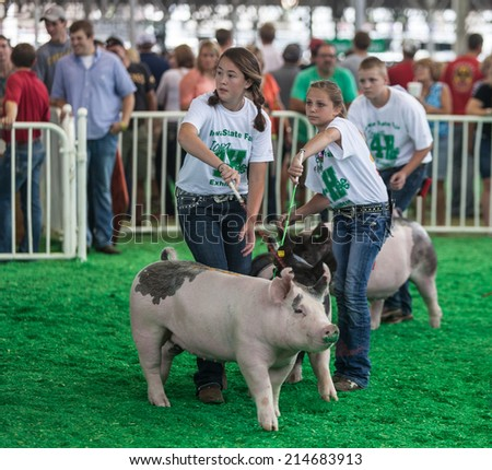 DES MOINES, IA /USA - AUGUST 10: Unidentified teens exercising and showing swine at Iowa State Fair on August 10, 2014 in Des Moines, Iowa, USA. - stock photo