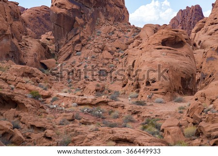 Desert big horn sheep in Valley of Fire State Park, Nevada, USA - stock photo