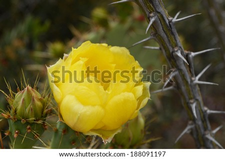Desert Cactus in the Spring - stock photo