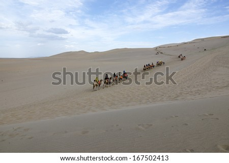 Desert camel walking in the Chinese Dunhuang. - stock photo