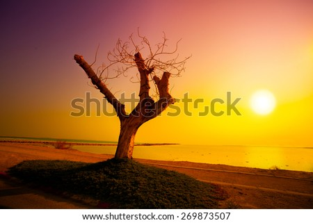 Desert Dead sea shore at sunrise - stock photo