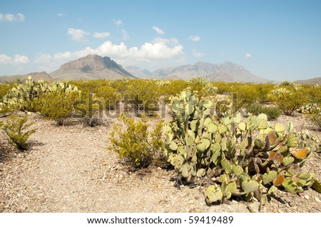desert landscape, chisos mountains and prickly pear cactus - stock photo