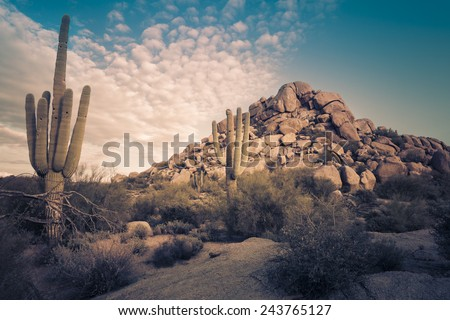 Desert landscape in Scottsdale, Phoenix, Arizona area - Image cross processed - stock photo