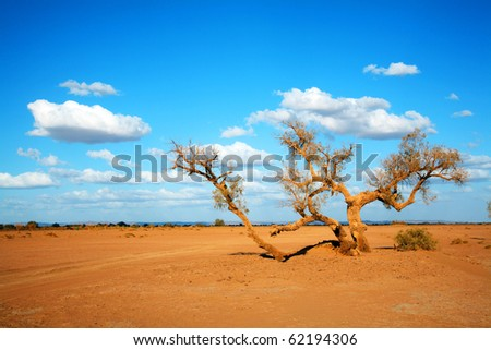 Desert Landscape, Sahara, Africa - stock photo