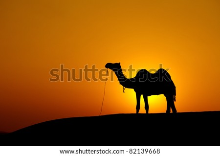 Desert landscape with camel at sunset - stock photo