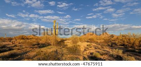 Desert landscape with saguaro cactus - stock photo