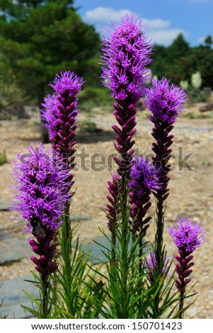 Desert Plants - stock photo