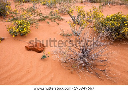 Desert scene with sand stone rock and flowering bush - stock photo