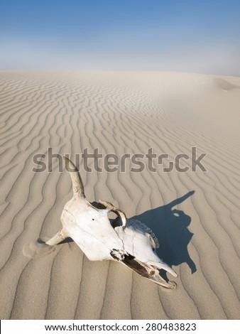 Desert skull, Africa - stock photo