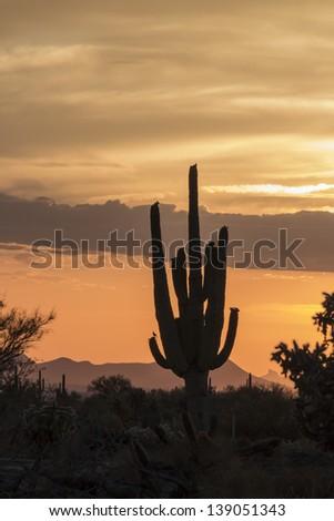 Desert Sunset in Tucson, Arizona - stock photo