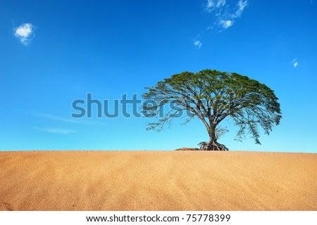 desert with big tree in blue sky - stock photo