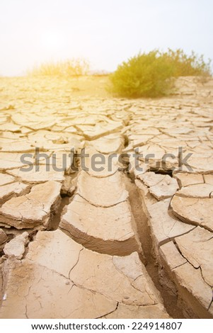Desert with cracked ground. Little depth of field. - stock photo