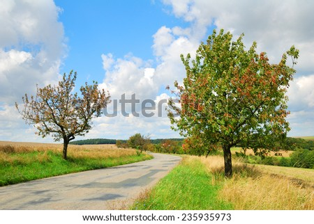 Deserted countryside road with cherry trees in late Summer - stock photo