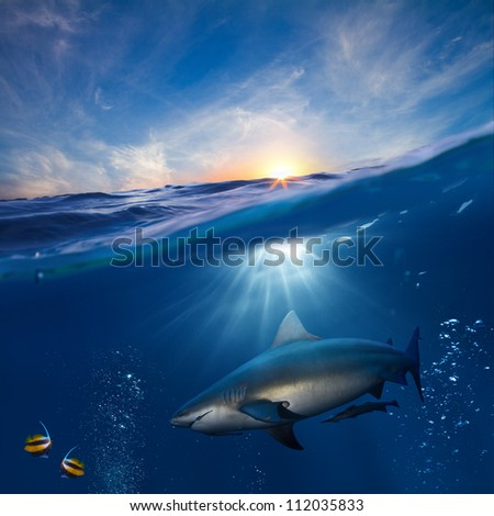 design template with underwater part and sunset skylight splitted by waterline and angry hungry shark underwater - stock photo