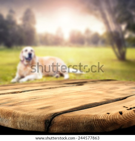 desktop of free space and dog  - stock photo
