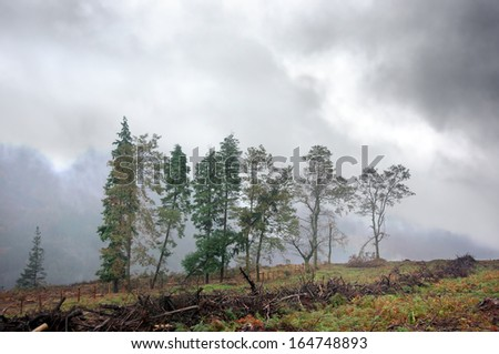 desolate landscape with trees and deforestation - stock photo