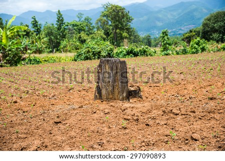 Destroy's forest by human who need benefit more than nature - stock photo