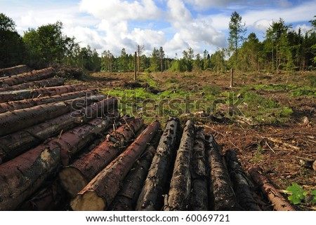 Destroyed forest - stock photo