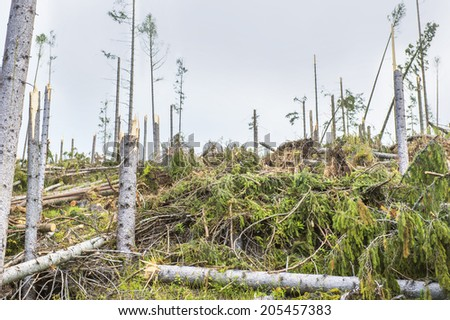 Destroyed forest as an effect of strong storm in High Tatras, Slovakia - stock photo