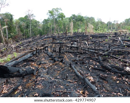 Destroyed tropical rainforest in Amazonia. Image taken on 2th February 2016 - stock photo