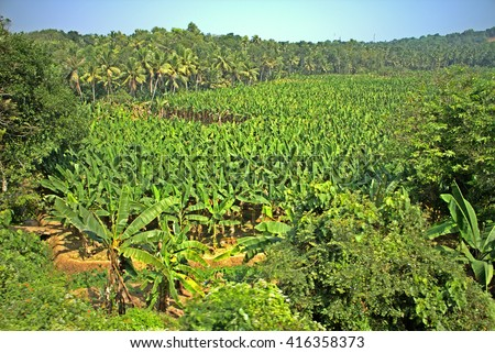 Destruction of forests under fruit plantations (slash and burn agriculture). Asian tropical agricultural region of gardens of jungle and instead of jungle - stock photo