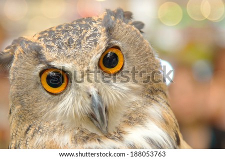 detail face great grey owl . - stock photo