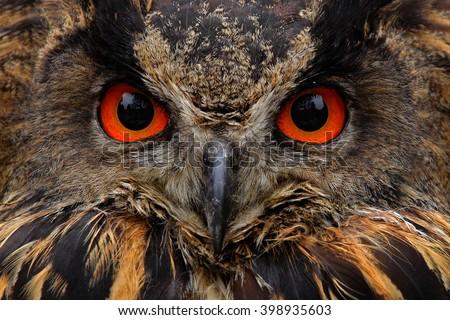 Detail face portrait of bird, big orange eyes and bill, Eagle Owl, Bubo bubo, rare wild animal in the nature habitat, Germany - stock photo