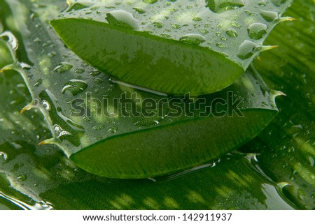 Detail leafs aloe vera with drop of water - stock photo