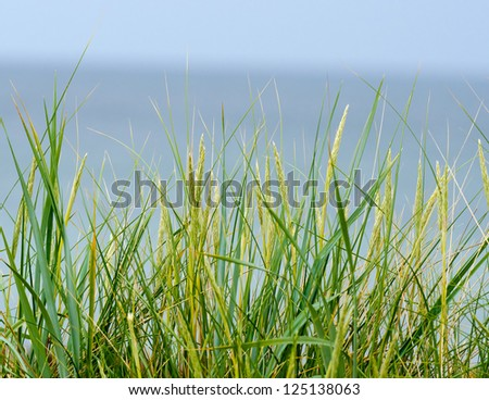 Detail of a grass plant at the beach. - stock photo