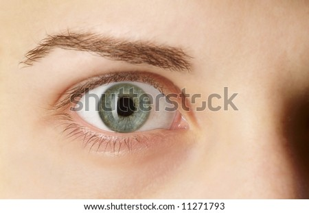 detail of a green eye with brow - stock photo