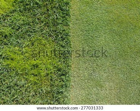Detail of a green golf course with two symmetrical portions having different lengths of grass divided by a straight line - stock photo