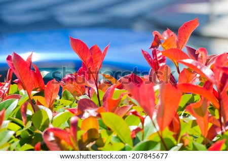 Detail of a hedge - stock photo