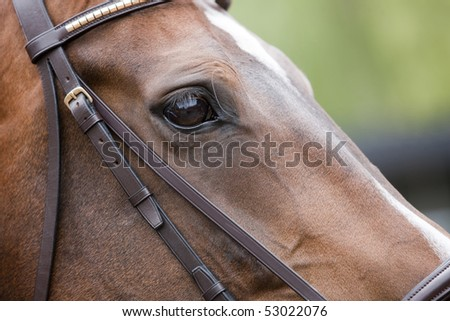 Detail of a horse relaxing before competition, sharpness on the eyes. - stock photo