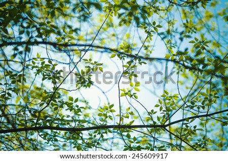 Detail of a tree in spring - stock photo