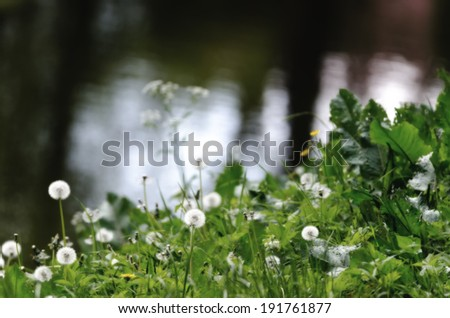 Detail of a wildflower meadow with a pond in the background. - stock photo
