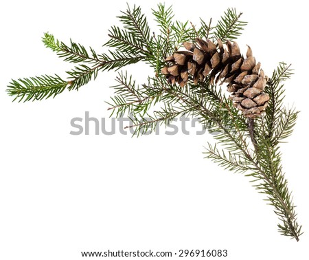 detail of christmas frame - twig of fir tree with cone on white background - stock photo