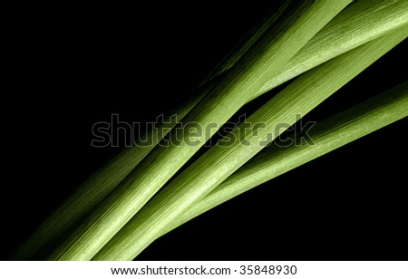 detail of curving green flower stems on black - stock photo