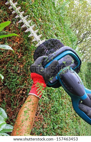 detail of cutting thuja hedge with hedge clippers,  - stock photo