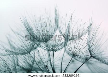 Detail of dandelion against white background - stock photo