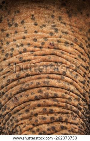 Detail of elephant skin - stock photo