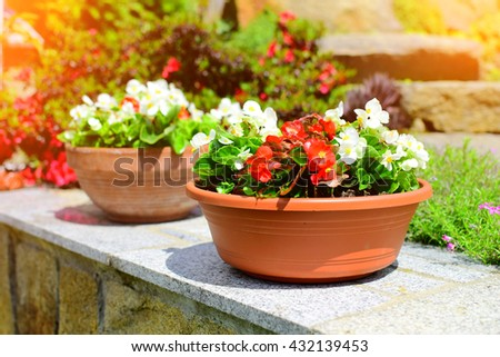Detail of flower pot in garden in summer time. Summer background. Background with sunshine. - stock photo