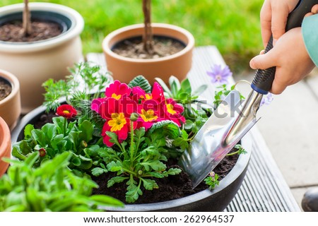 Detail of hand planting flowers and herbs - stock photo