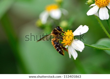 detail of honeybee - stock photo