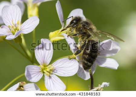 Detail of Honeybee Pollinated Flower - stock photo