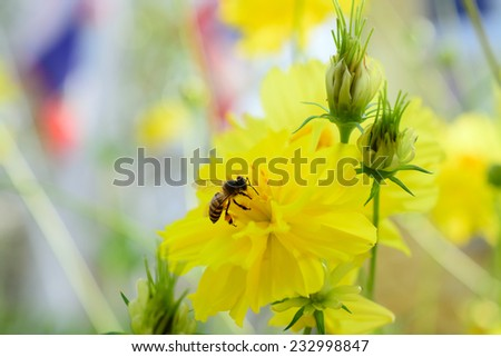 Detail of honeybee pollinated of flower - stock photo
