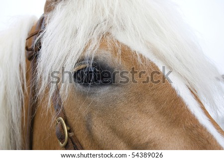 Detail of horse head with long eye-lashes - stock photo