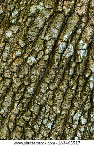 Detail of oak tree bark - stock photo