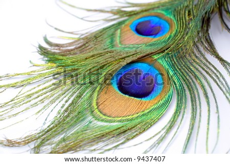 detail of peacock feather as colorful background - stock photo